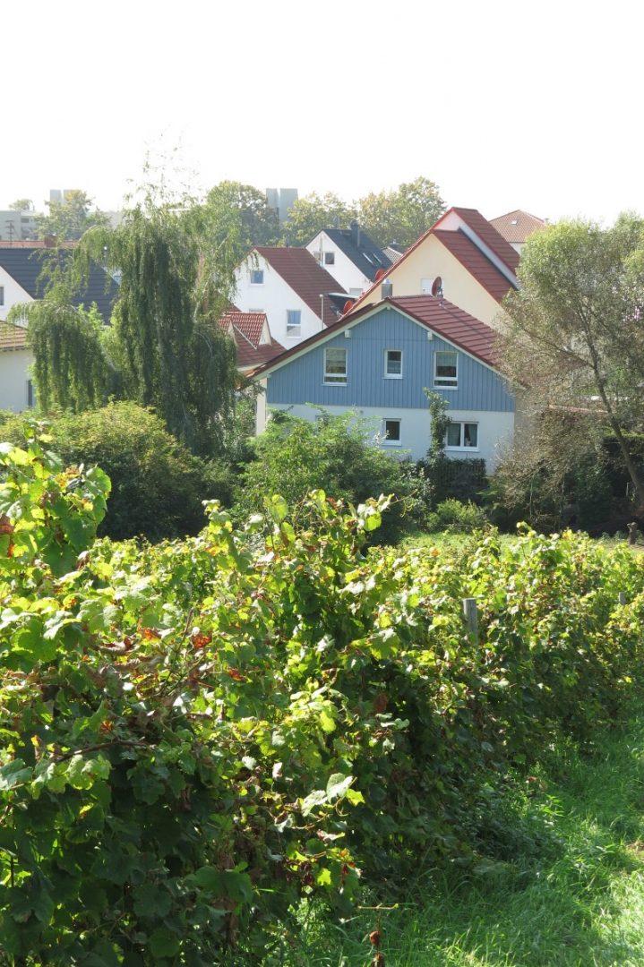 GAGFAH Häuser Sicht von Weinbergen