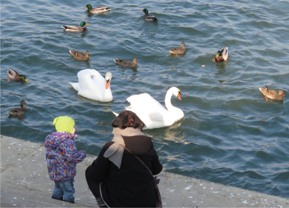 Mutter mit Kind und Enten und Schwänen am Rhein