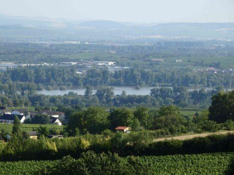 **Zwangsversteigerung – Provisionsfrei** Weingut und Privathaus mit unverbaubarem Rheinblick!, 65366 Geisenheim, Wohn- und Geschäftshaus